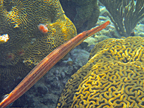 Fish at                                 the Tamarindo reef