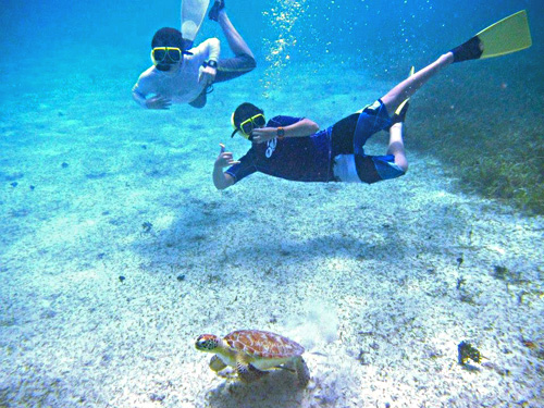Guests at Tamarindo Estates Reef                   with turtle